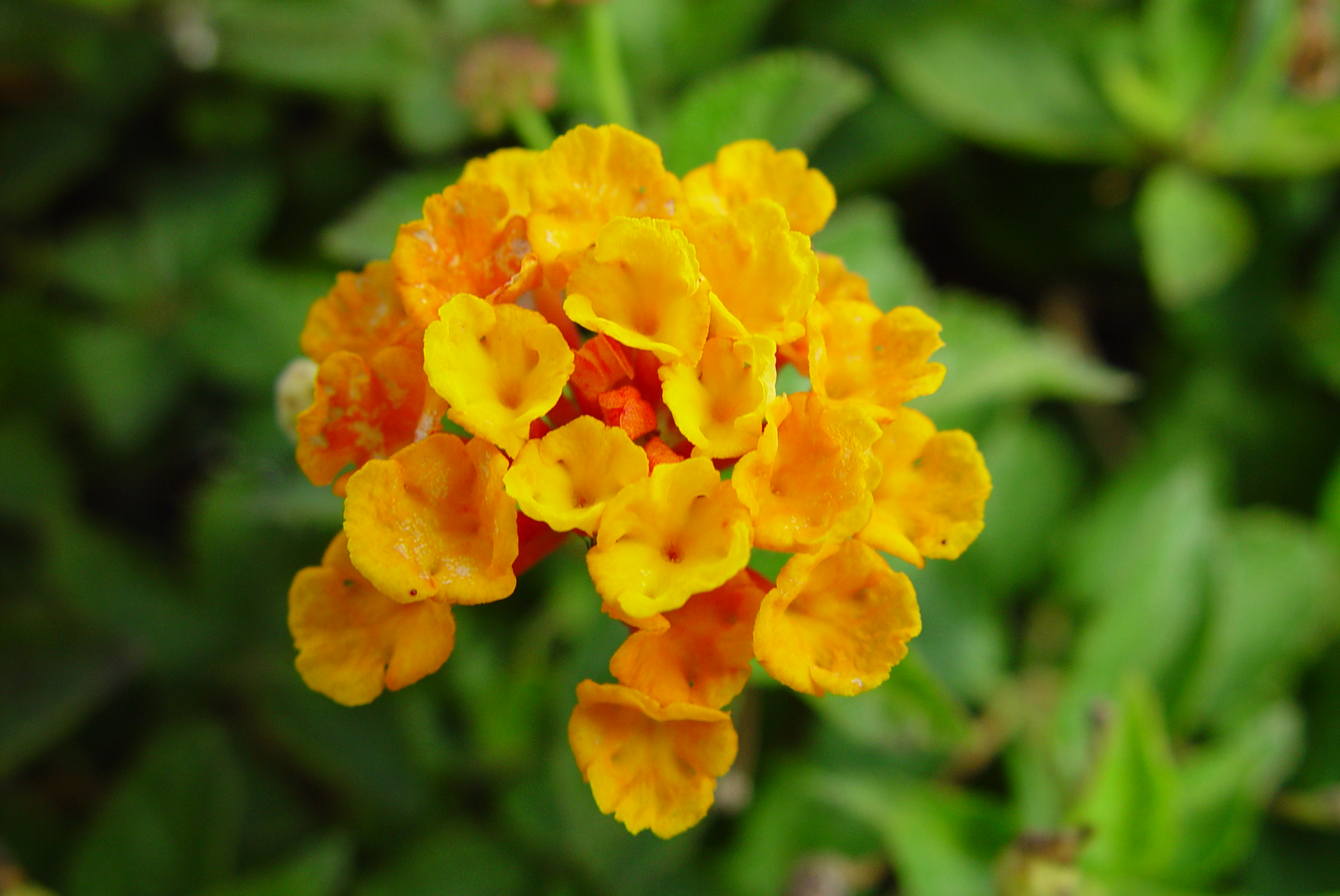 Free stock images of plants flowers and plants 3 izmirmasajfo